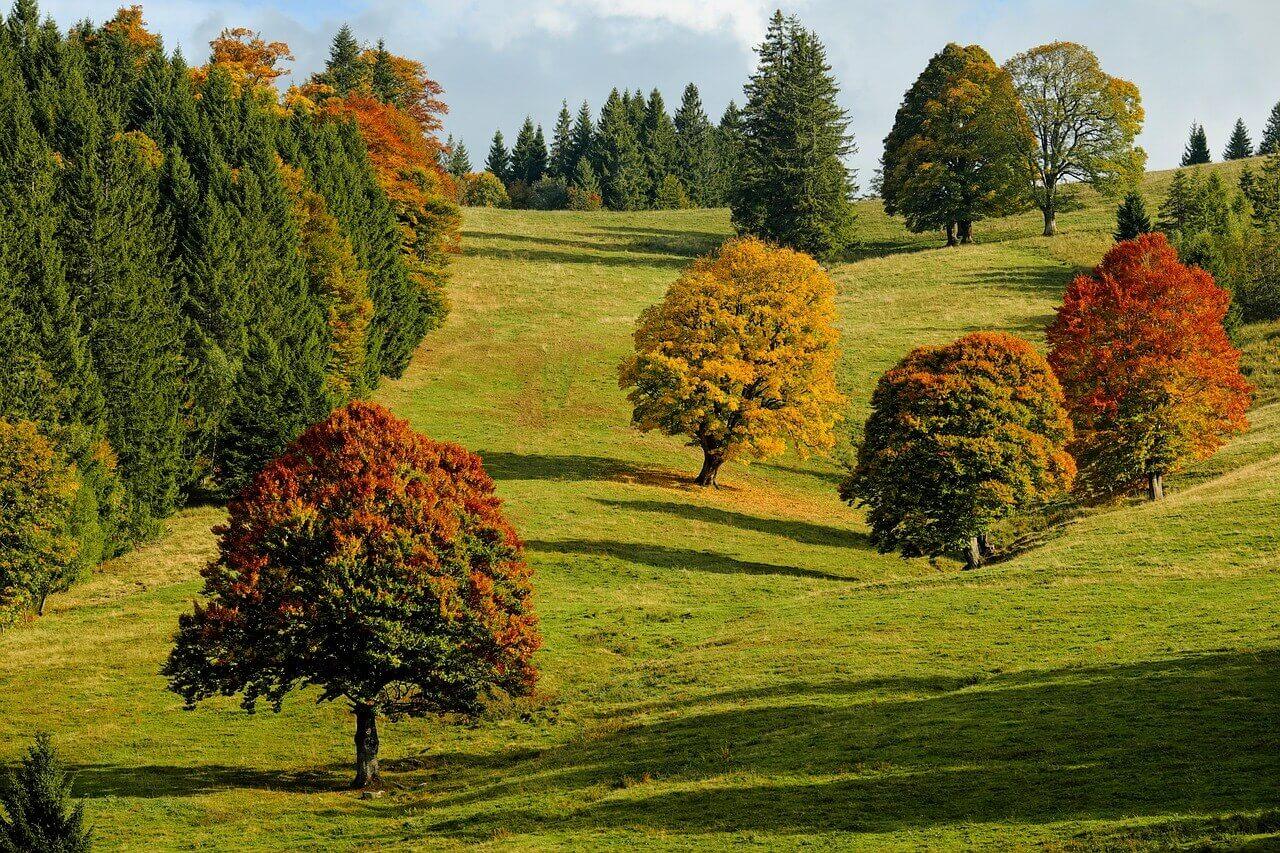 autumn-2800880_1280 (1)