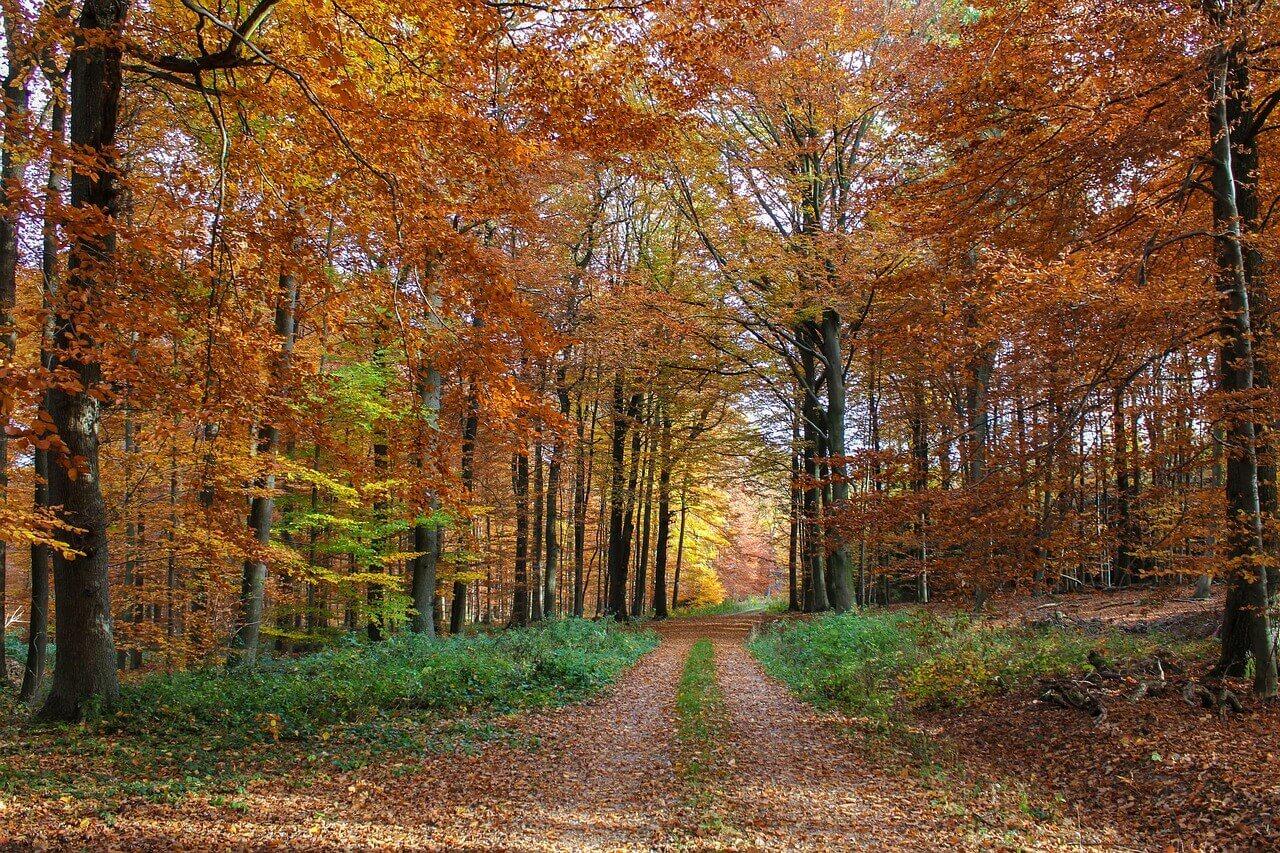 autumn-forest-3710367_1280 (1)