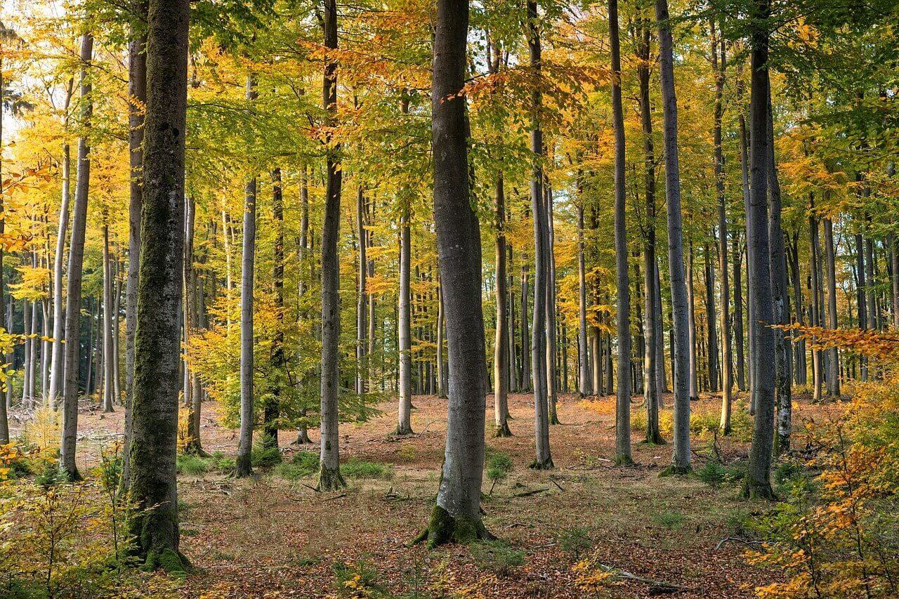 forest-3795202_1280 (1)